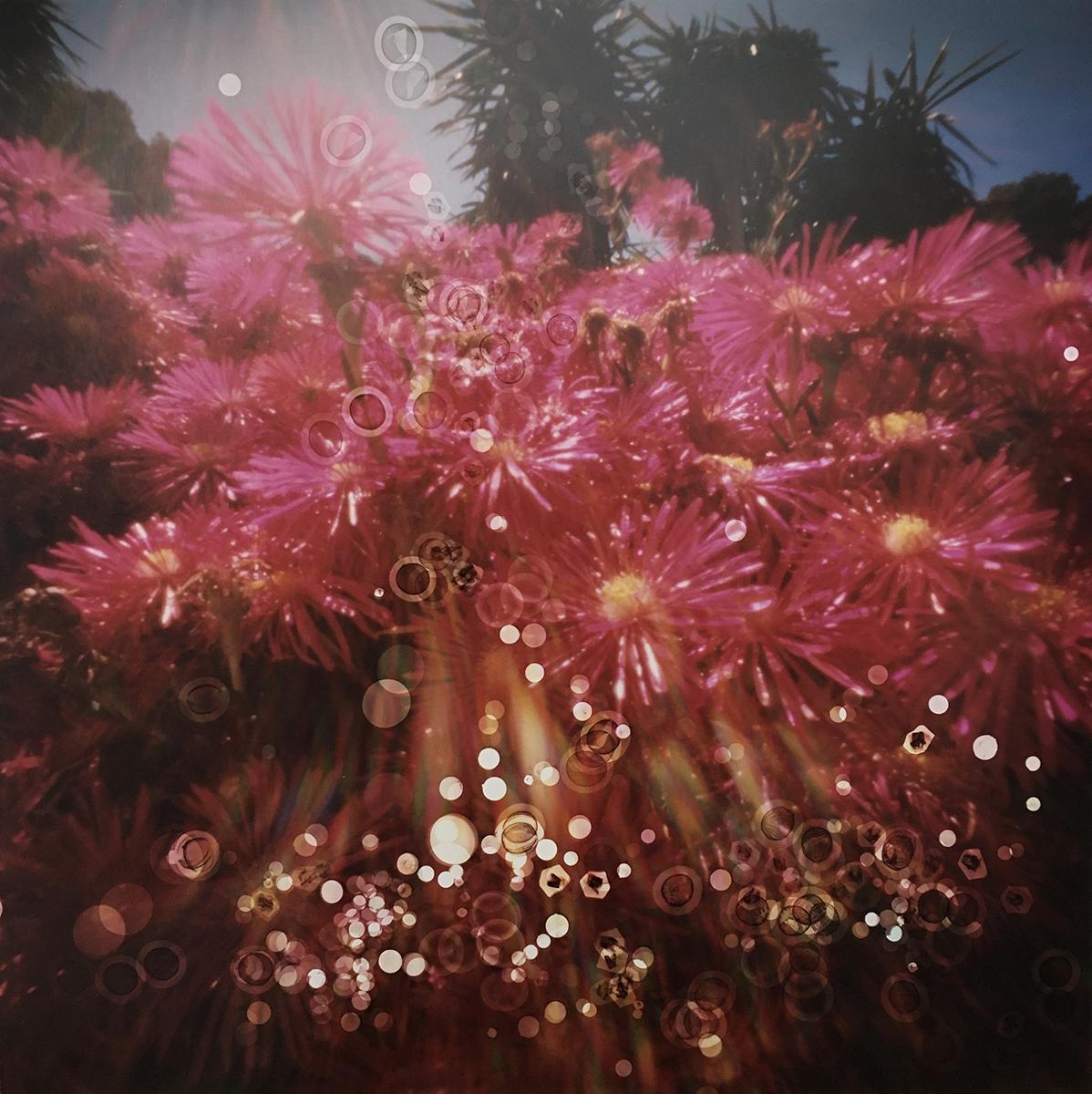 Jardi Botanic de Cap Roig, Spain (cactus flowers 1) (2019)