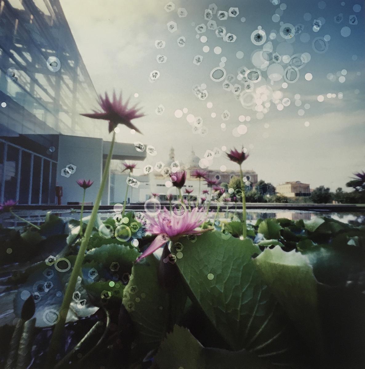 Biodiversity Garden, Padua, Italy (lily pond) (2019)