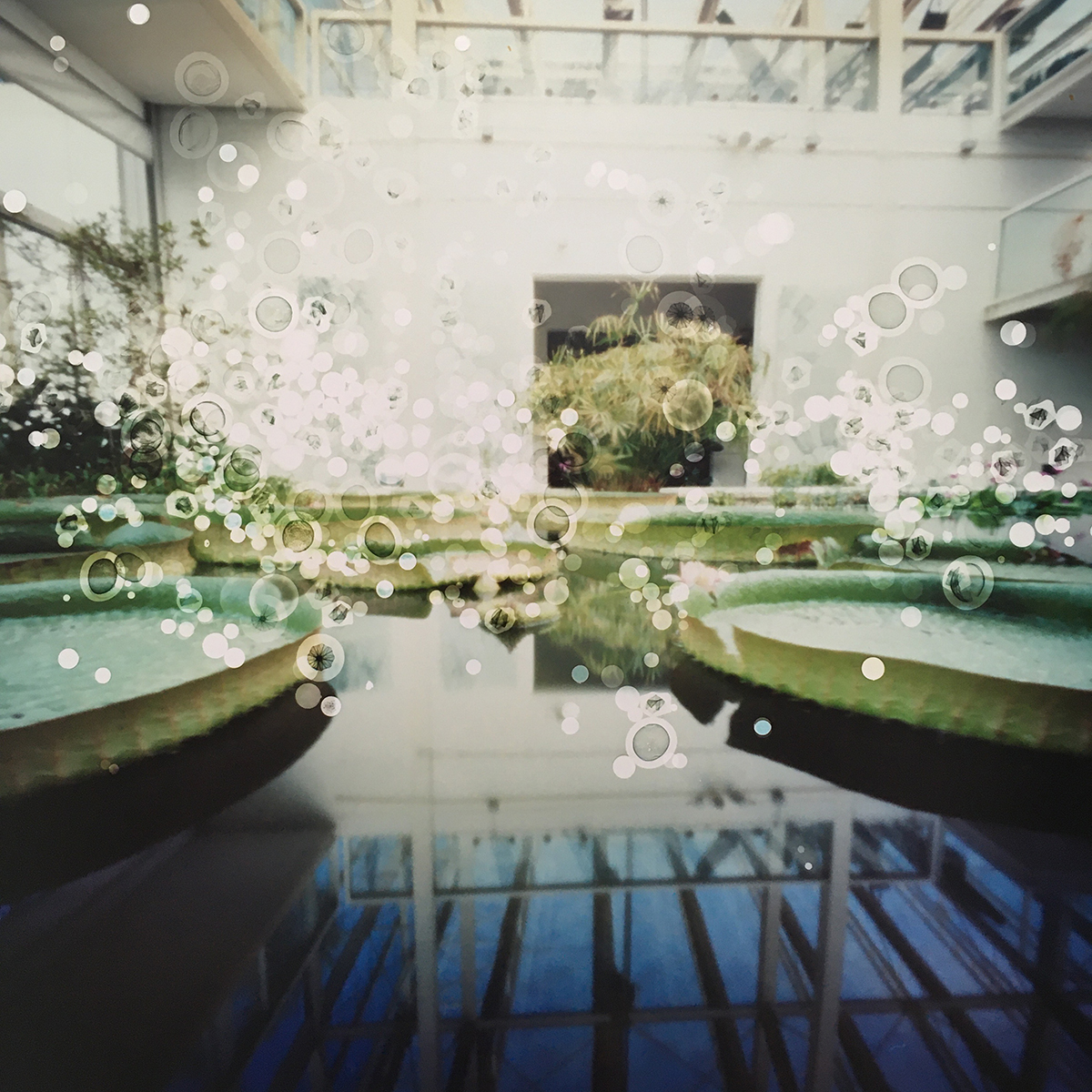 Biodiversity Garden, Padua, Italy (victoria lily pond) (2019)