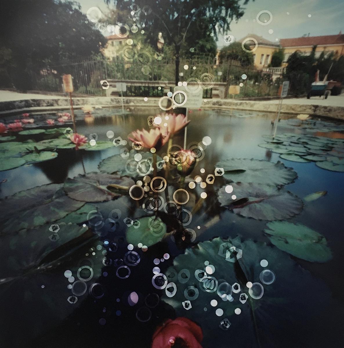 Orto Botanico, Padua, Italy (lily pond) (2019)