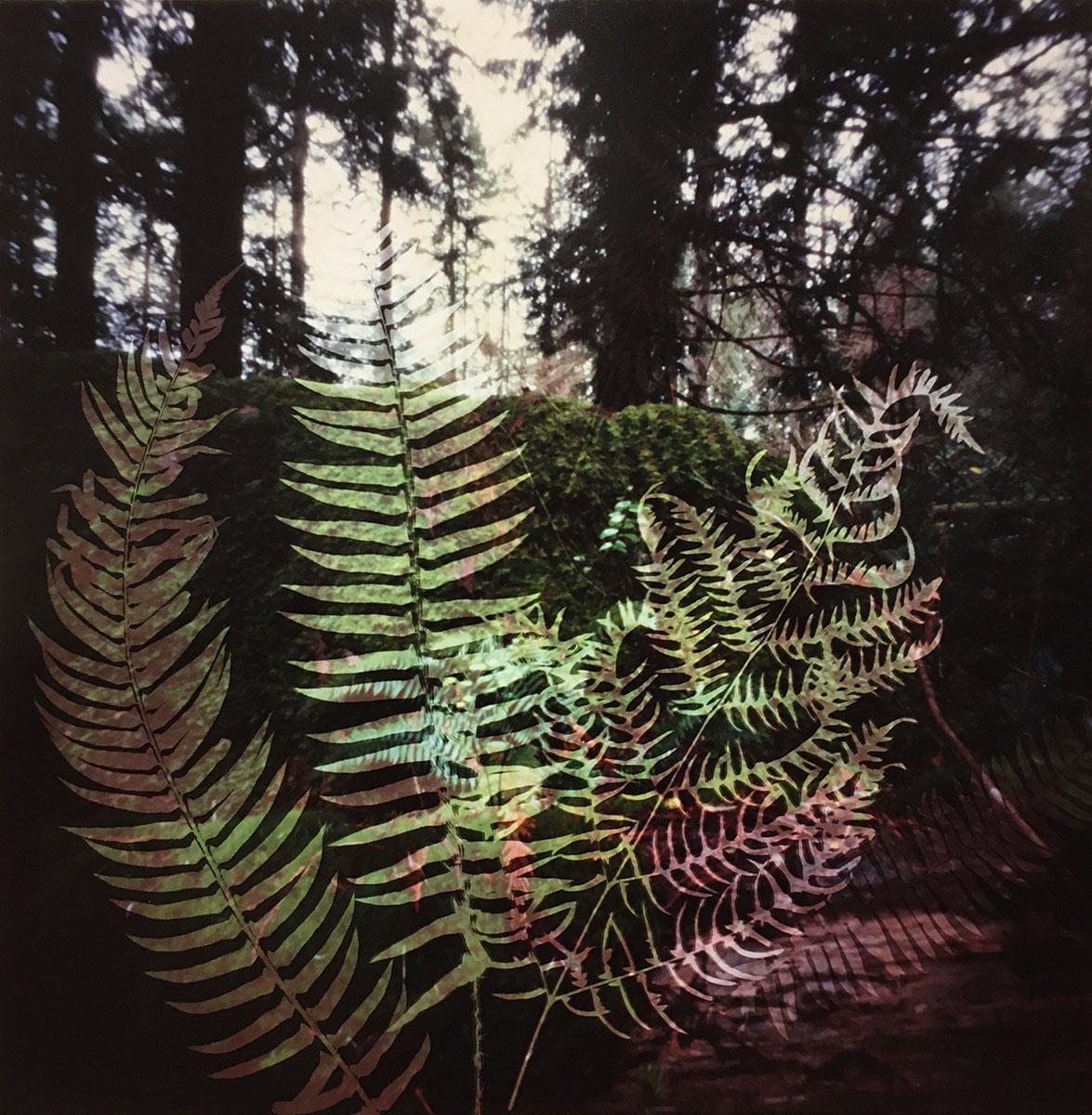 Understory 9.1, Bowen Island, British Columbia (2020)