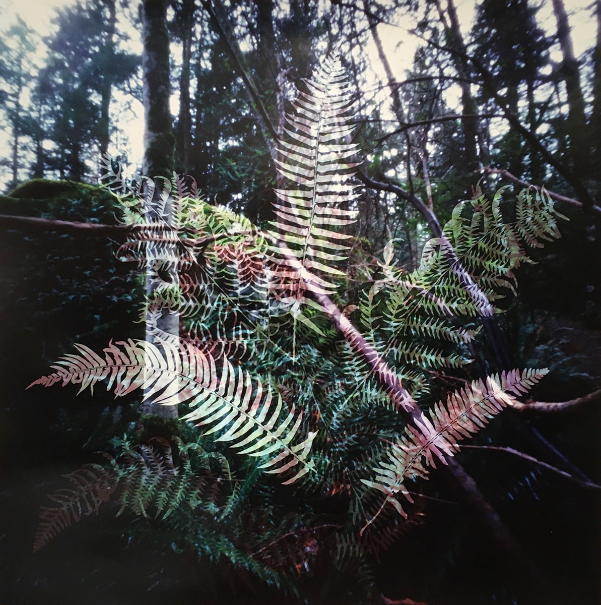 Understory 10, Bowen Island, British Columbia (2020)