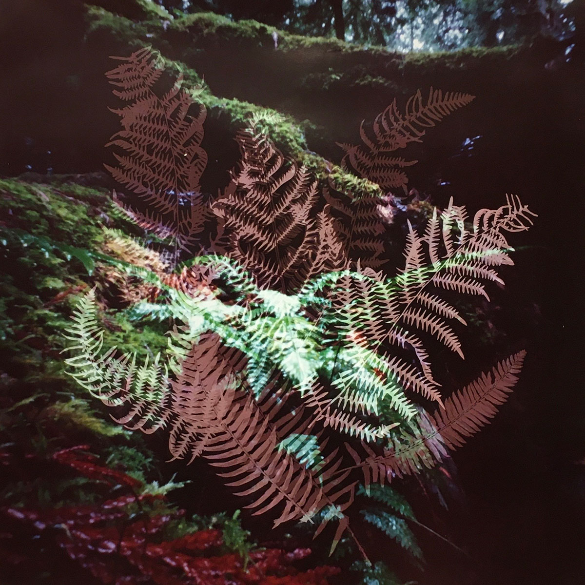 Understory 11.2, Bowen Island, British Columbia (2020)