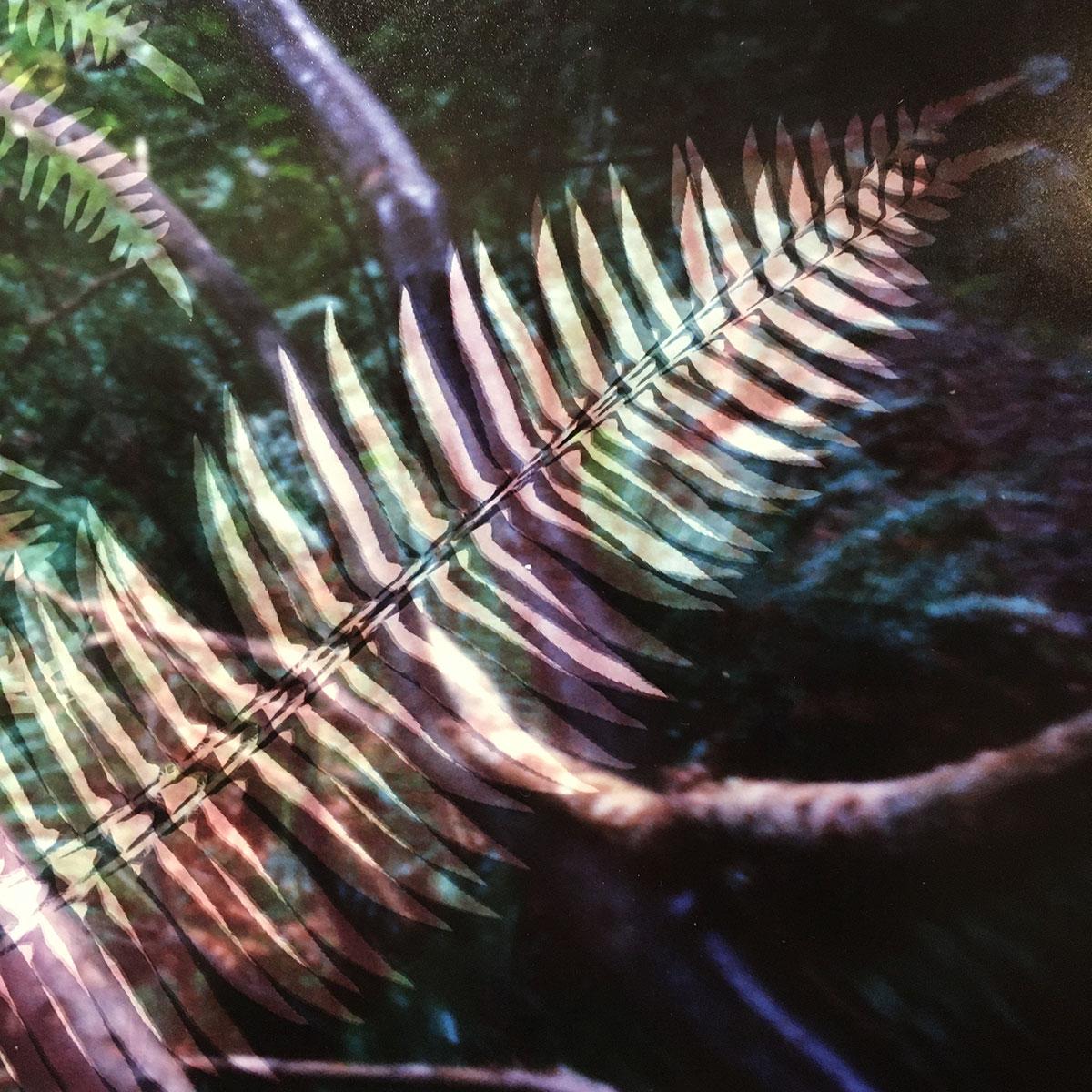 Understory (detail 10.2), Bowen Island, British Columbia (2020)