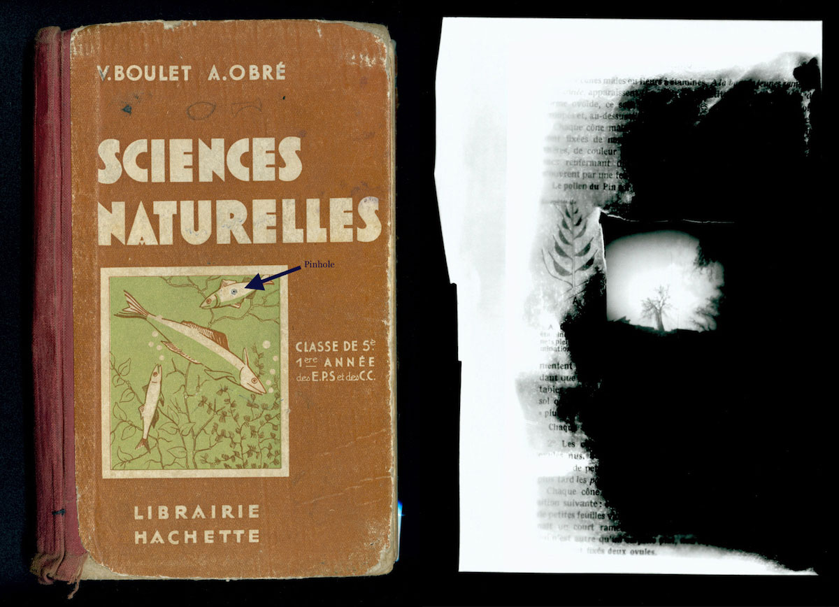 """Science Naturelles Book Camera (1938) and image. Tree, France (2006). Silver gelatin print, 11x14""""."""